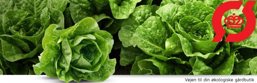 Find økologiske gårdbutikker