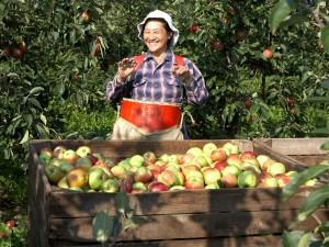 Ullemose frugt