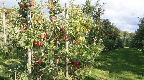 Harndrupskovfrugtplantage